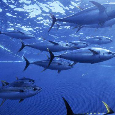 wild-caught-seafood-heroXL_279129